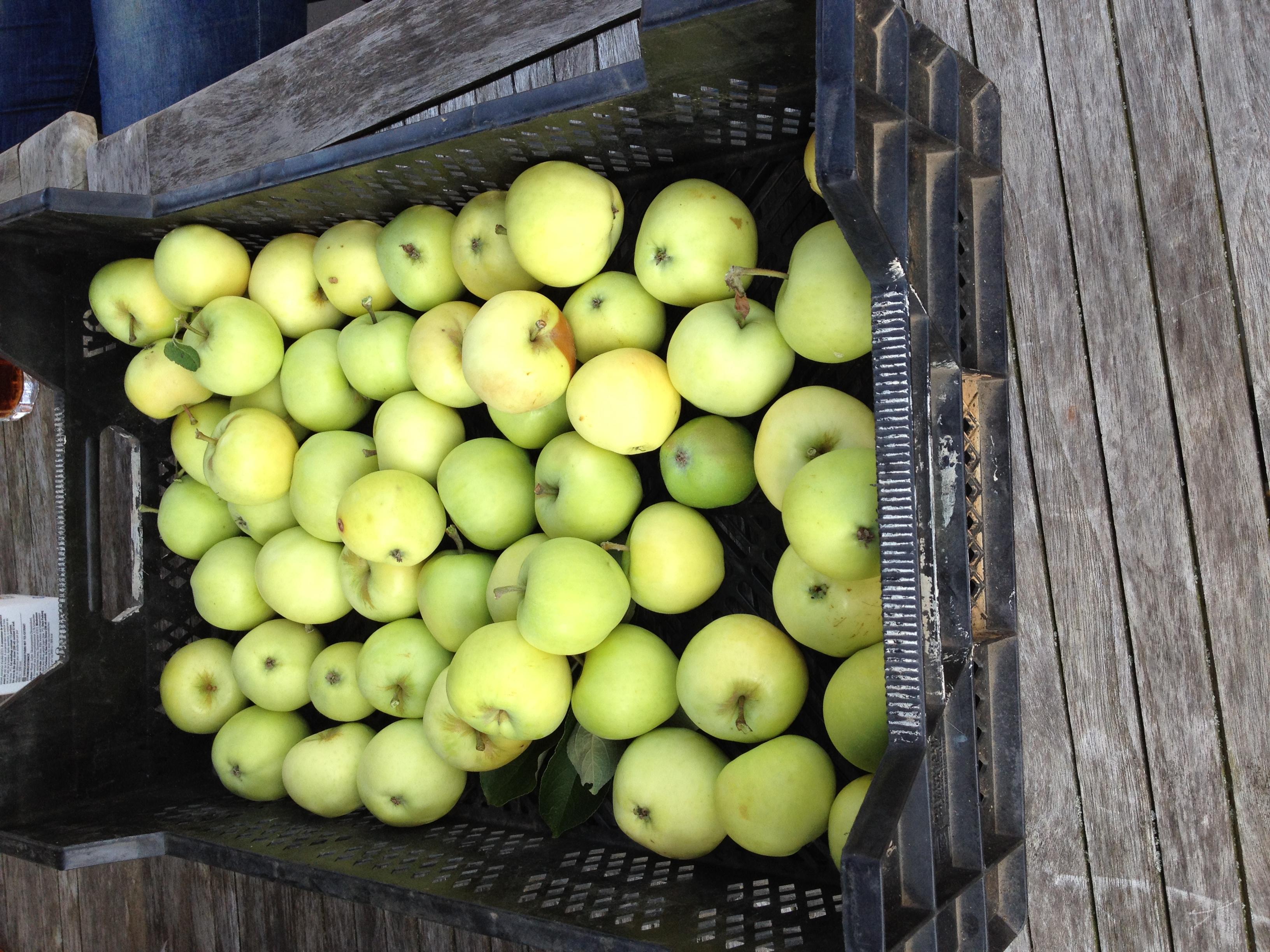 zure appels uit de boom van de buurvrouw.