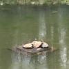 schildpadden voorjaar 2016